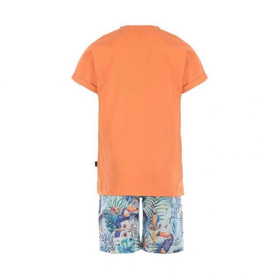 21906008-mandarino-back-set-tropical-portokali-agori